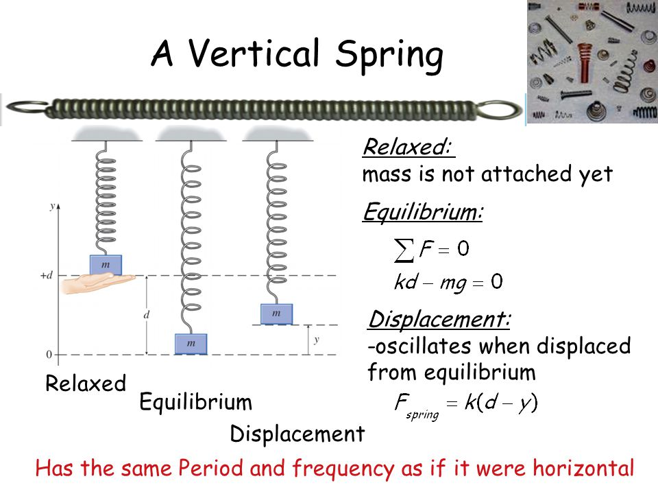 A Vertical Spring Relaxed: mass is not attached yet Equilibrium:
