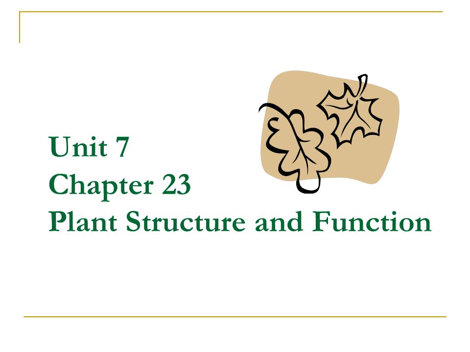 Unit 7 Chapter 23 Plant Structure and Function