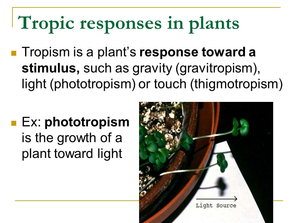 Tropic responses in plants