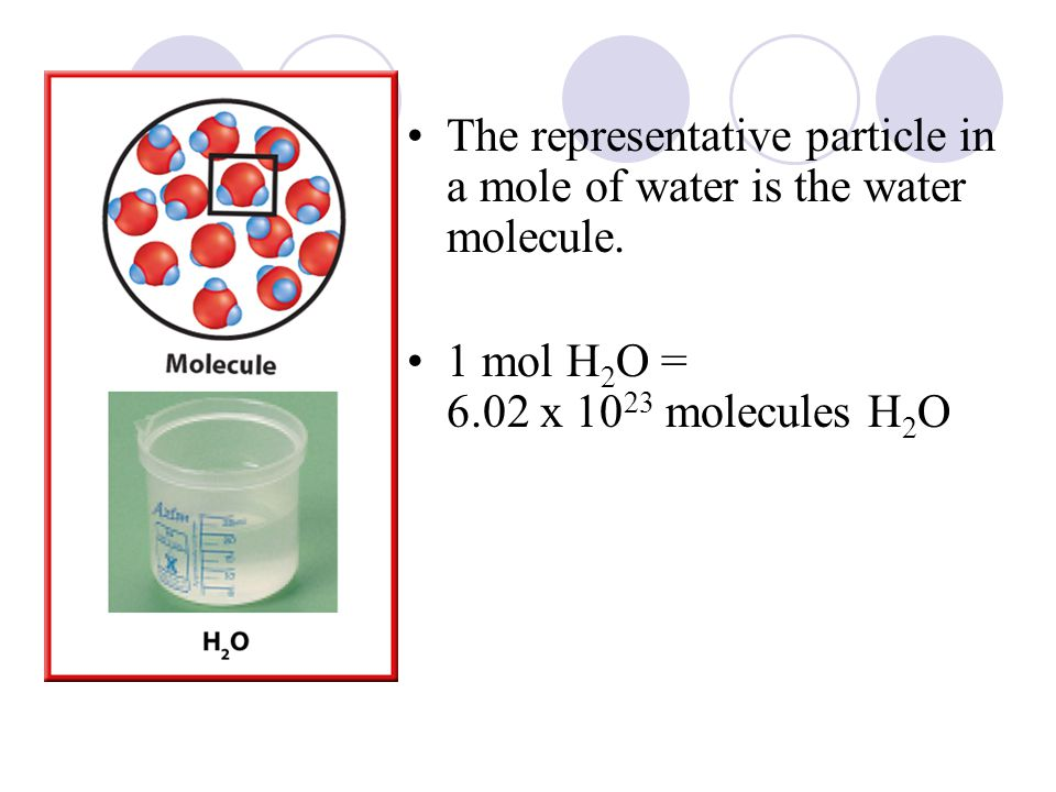 The representative particle in a mole of water is the water molecule.