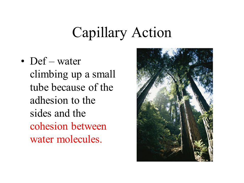 Capillary Action Def – water climbing up a small tube because of the adhesion to the sides and the cohesion between water molecules.