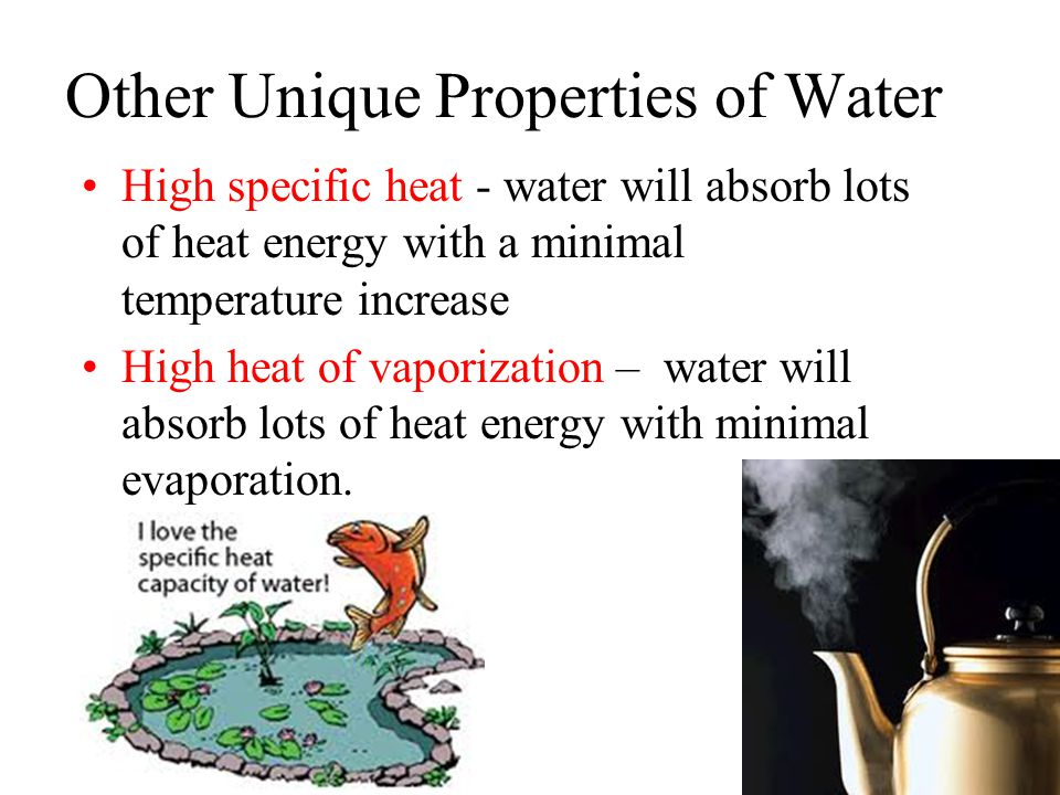 Other Unique Properties of Water