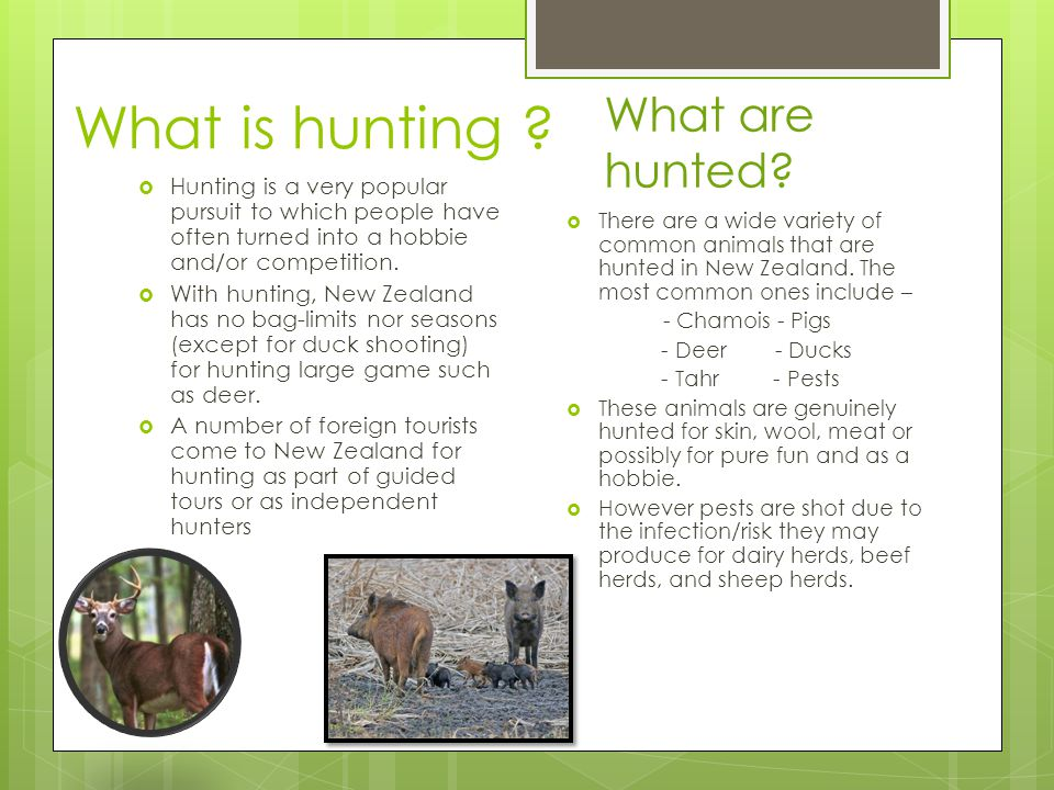 Animals reasons for hunting Why People