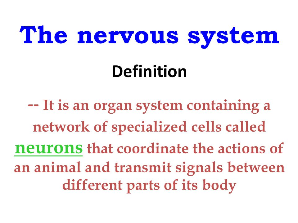 The nervous system Definition