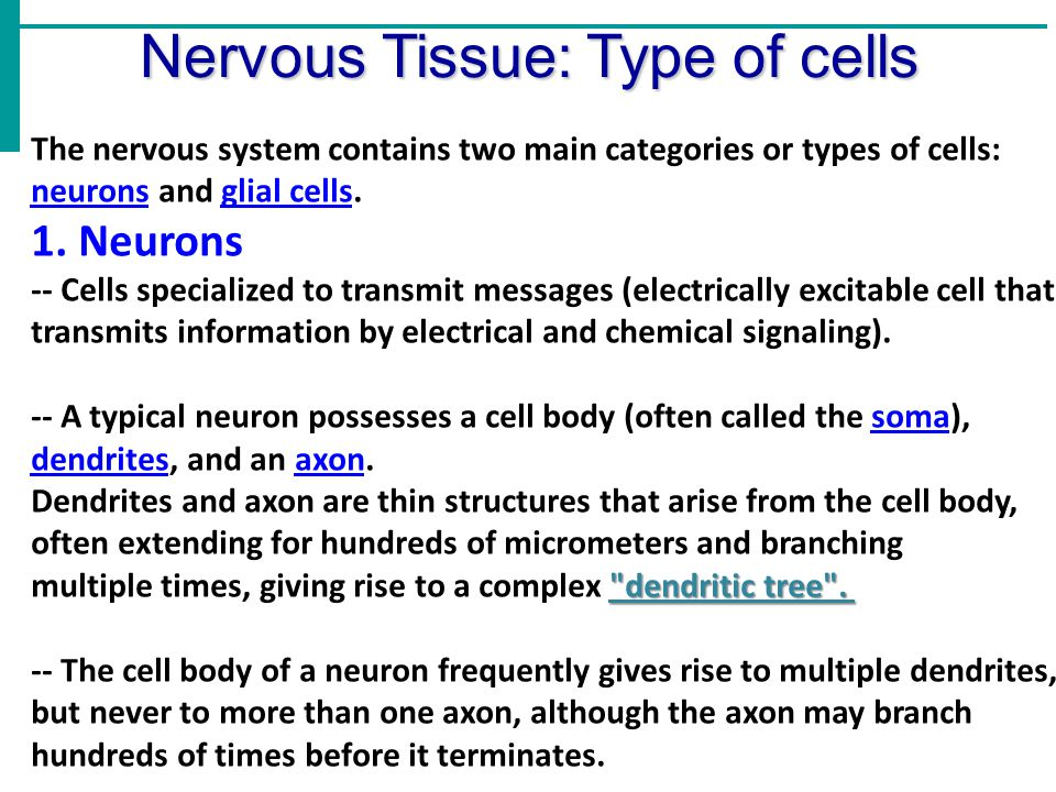 Nervous Tissue: Type of cells