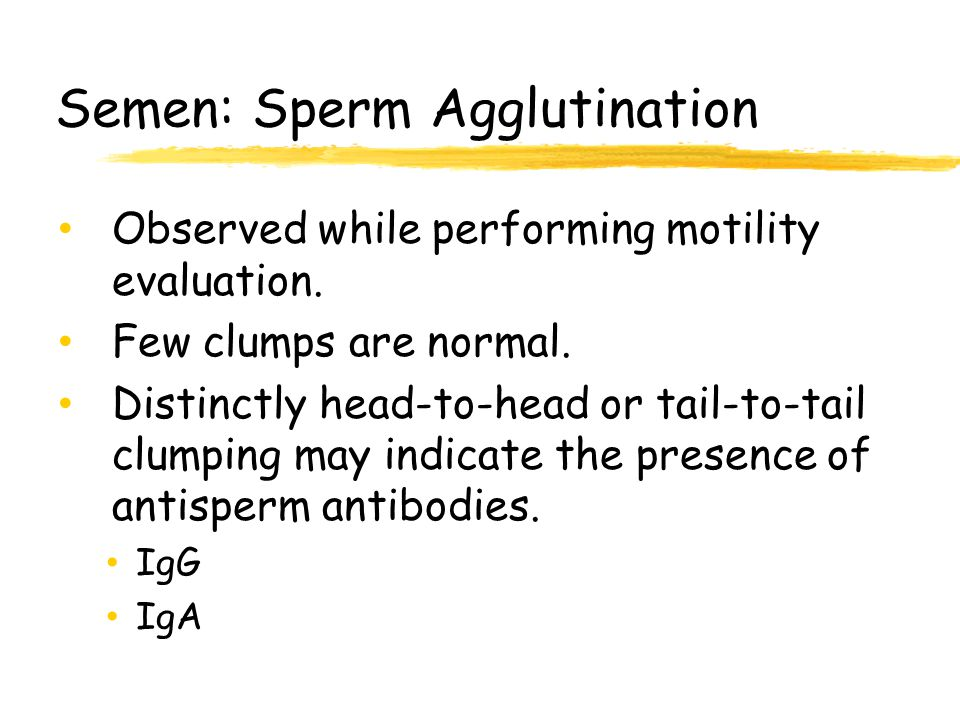 Not pleasant meaning of sperm agglutination something is