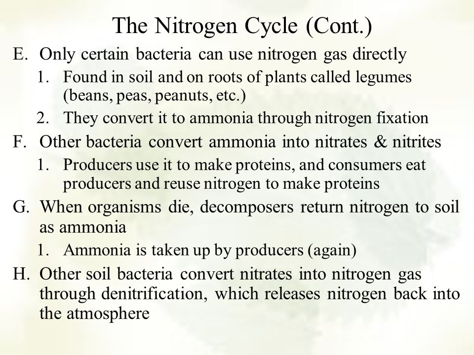 The Nitrogen Cycle (Cont.)
