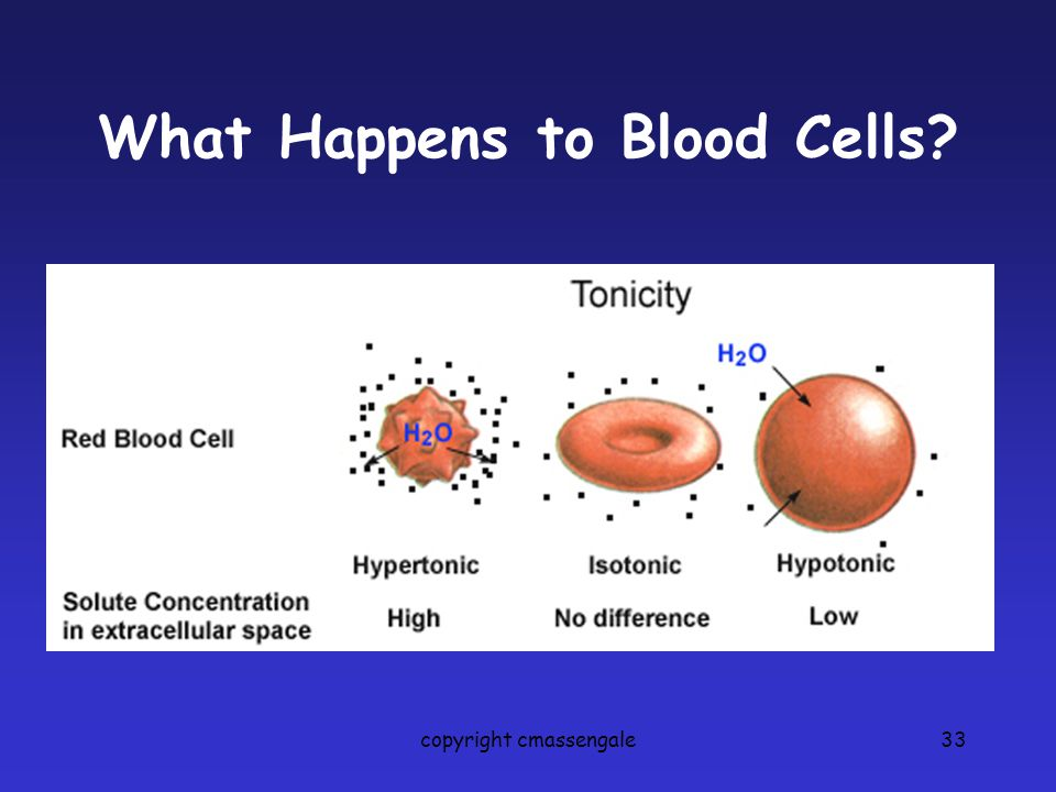 What Happens to Blood Cells