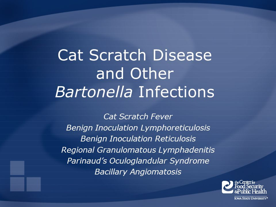 What Organism Causes Cat Scratch Fever