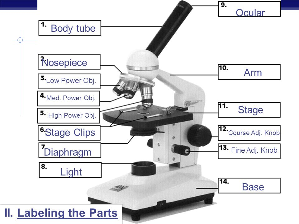 The Compound Light Microscope Diagram Diy Enthusiasts Wiring