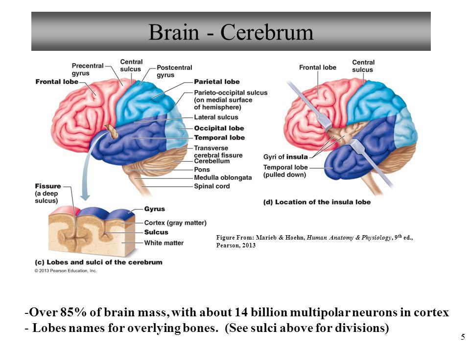 The Central Nervous System Ppt Video Online Download