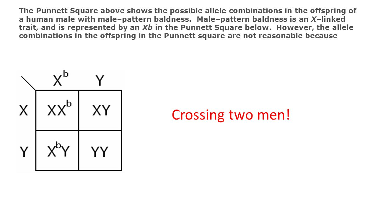 The Punnett Square above shows the possible allele combinations in the offspring of a human male with male–pattern baldness. Male–pattern baldness is an X–linked trait, and is represented by an Xb in the Punnett Square below. However, the allele combinations in the offspring in the Punnett square are not reasonable because