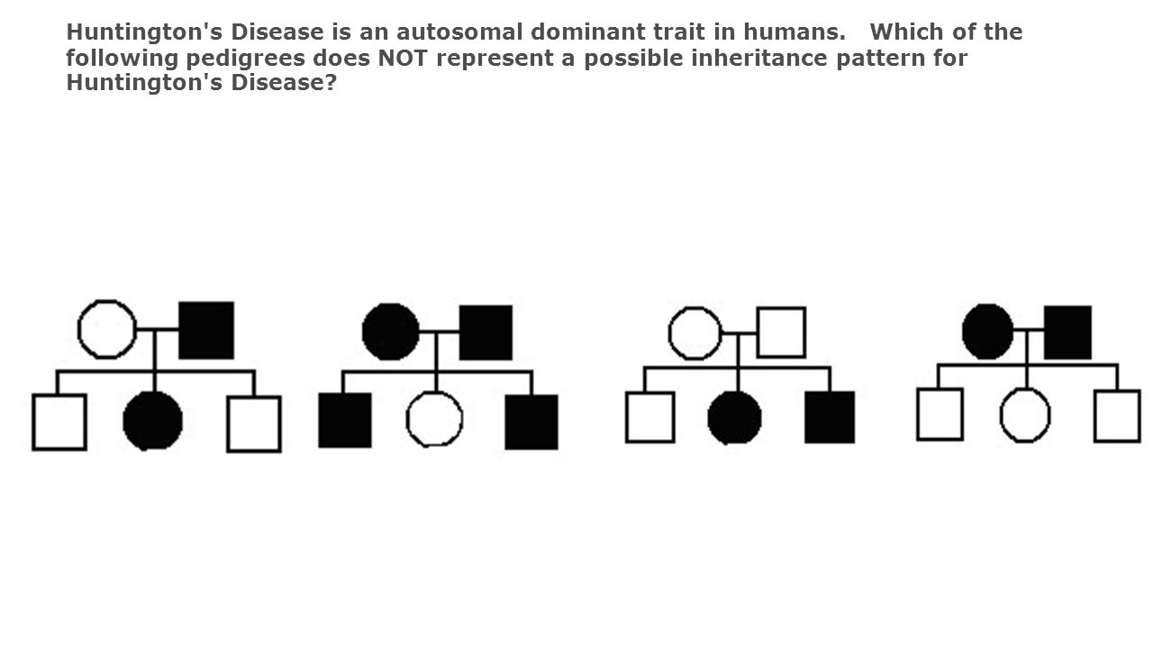 Huntington s Disease is an autosomal dominant trait in humans