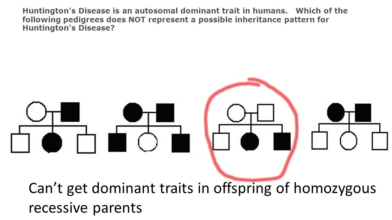 Can't get dominant traits in offspring of homozygous recessive parents
