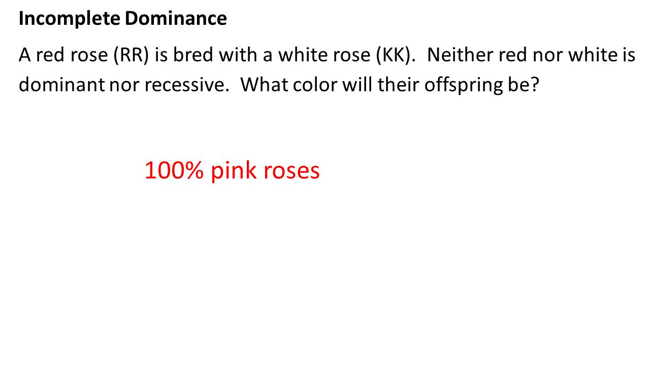 100% pink roses Incomplete Dominance