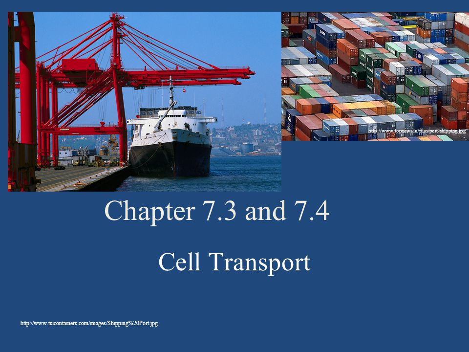 Chapter 7 3 And 7 4 Cell Transport Ppt Download
