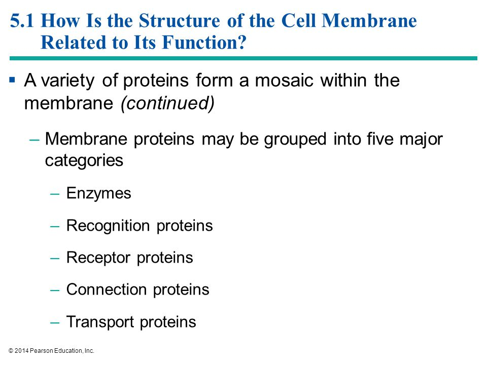 what is the major function of the cell membrane