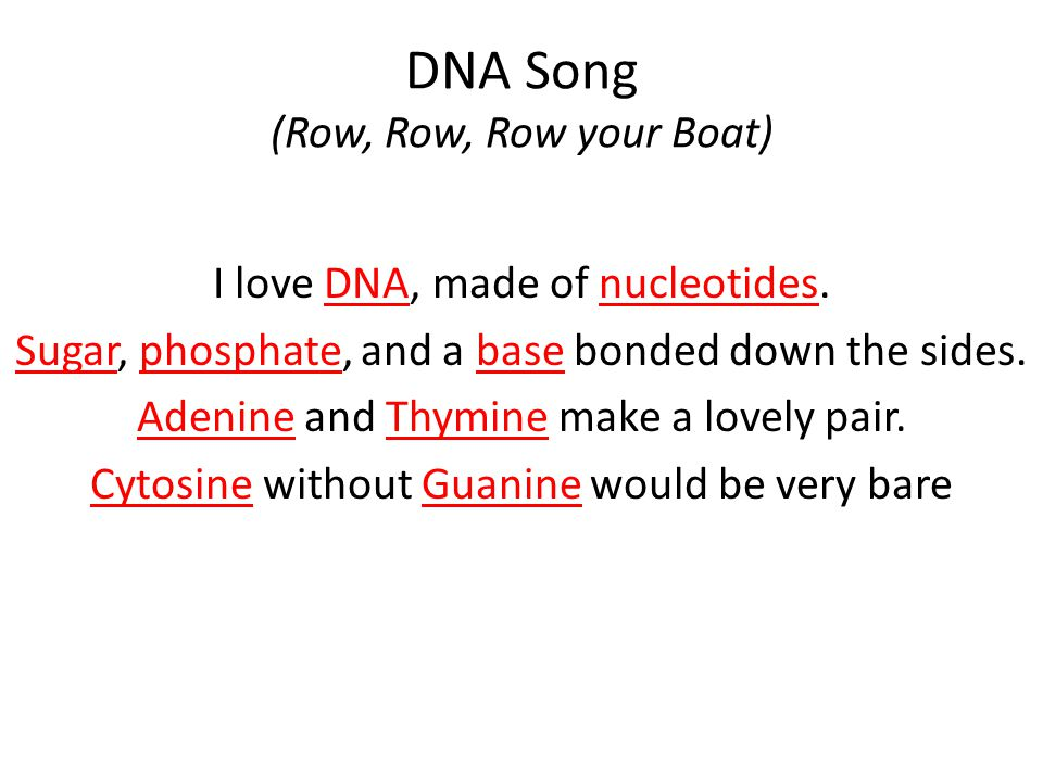 Dna Song Row Row Row Your Boat Ppt Video Online Download