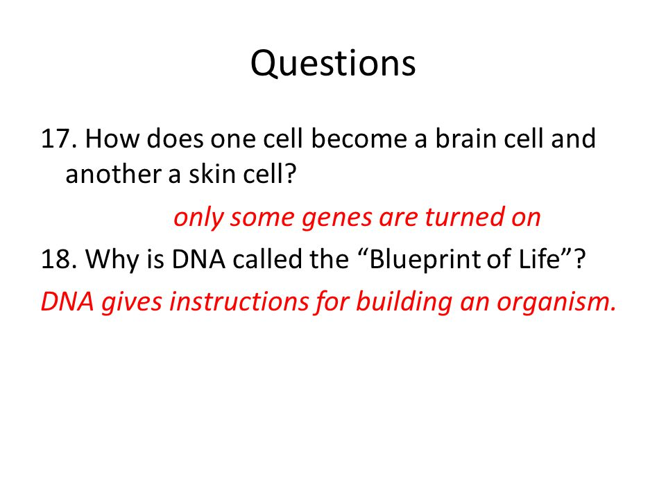 Dna song row row row your boat ppt video online download questions malvernweather Gallery