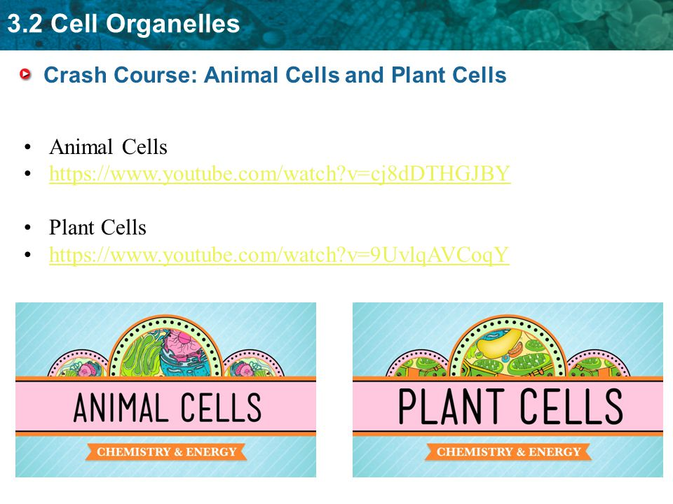eukaryotic cell organelles and their functions pdf