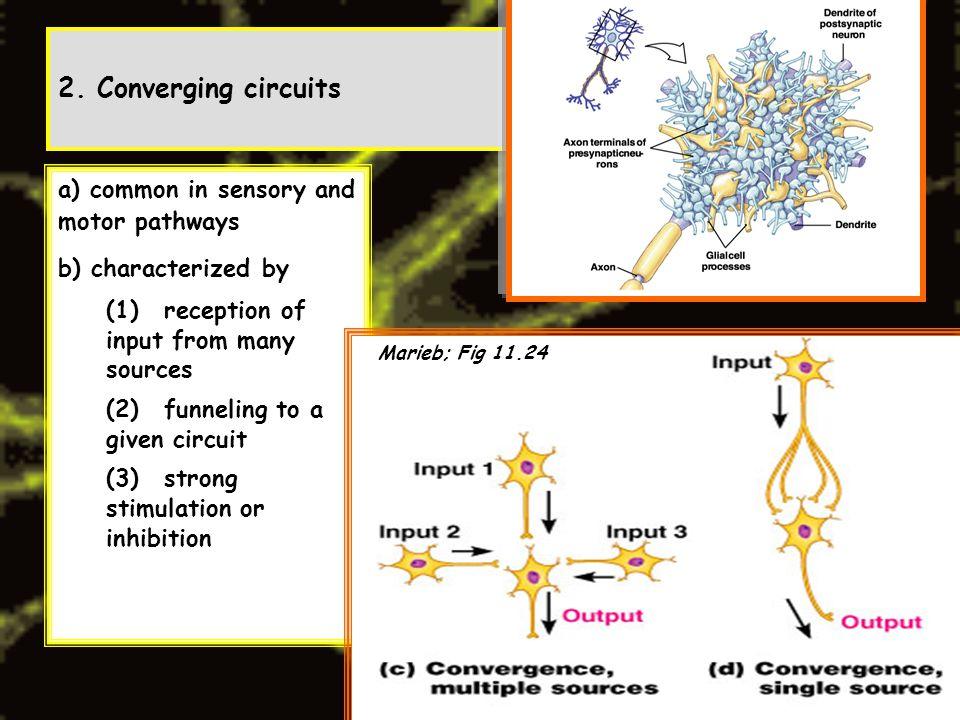 Human Anatomy Marieb Converging Circuit - Circuit Diagram Symbols •