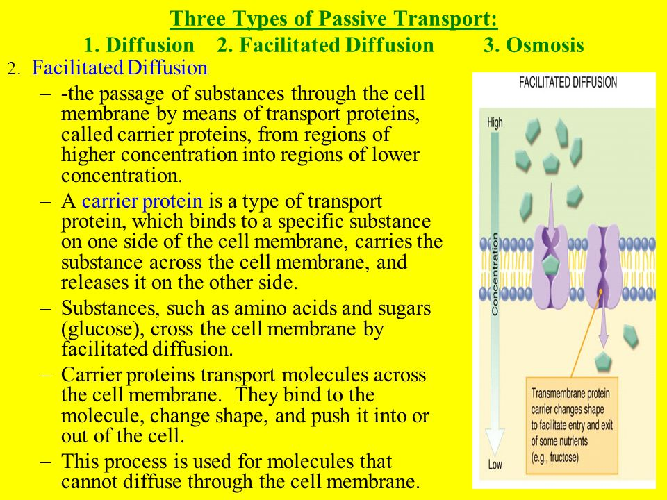 Three Types of Passive Transport: 1. Diffusion. 2