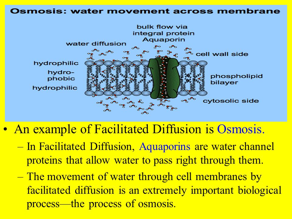 An example of Facilitated Diffusion is Osmosis.