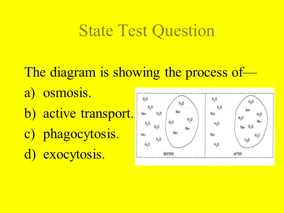 State Test Question The diagram is showing the process of— osmosis.