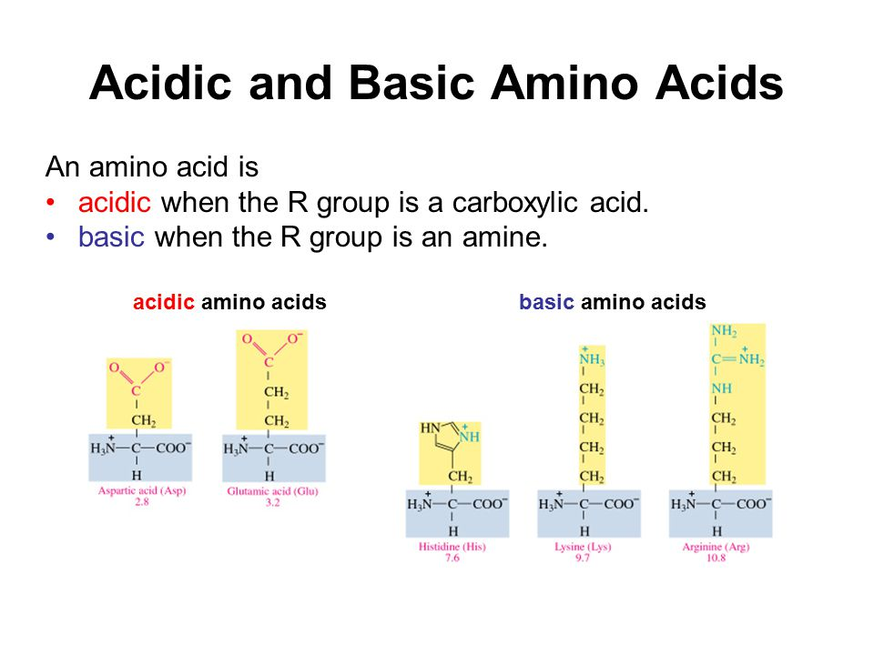 Amino acids proteins and enzymes ppt video online download acidic and basic amino acids altavistaventures Images