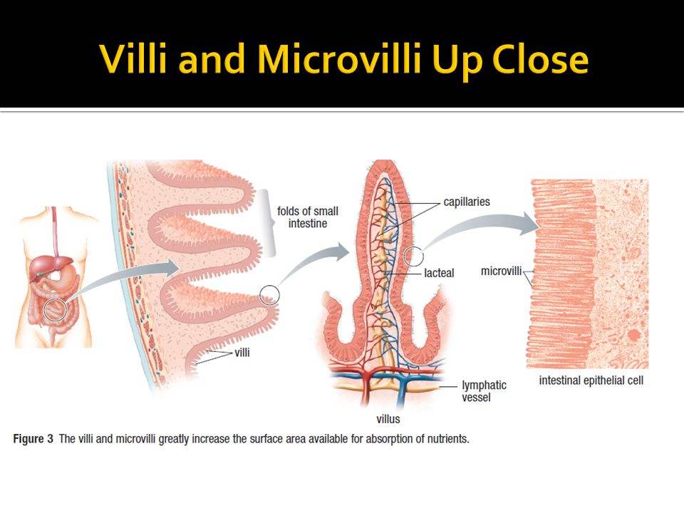 Lesson 5 Digestion In The Small And Large Intestines Ppt Video