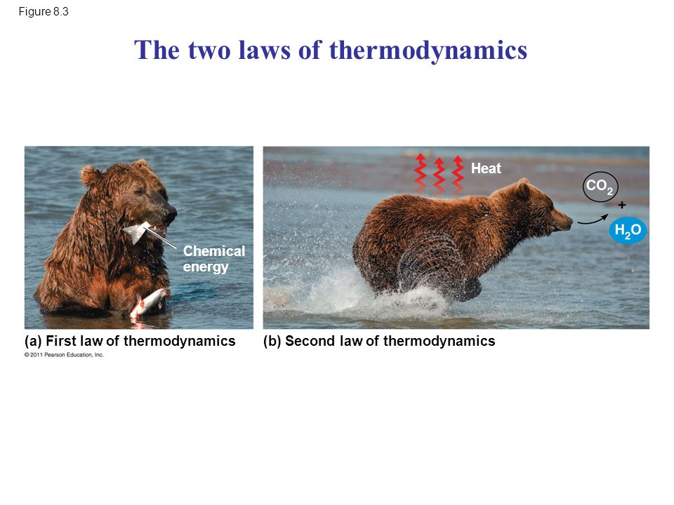 The two laws of thermodynamics