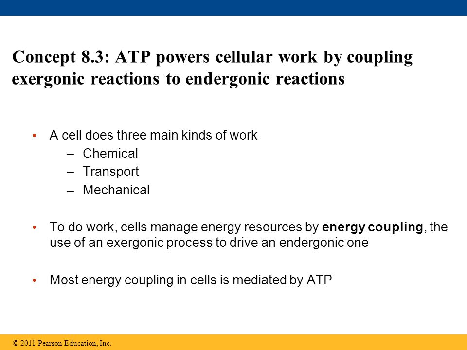 Concept 8.3: ATP powers cellular work by coupling exergonic reactions to endergonic reactions