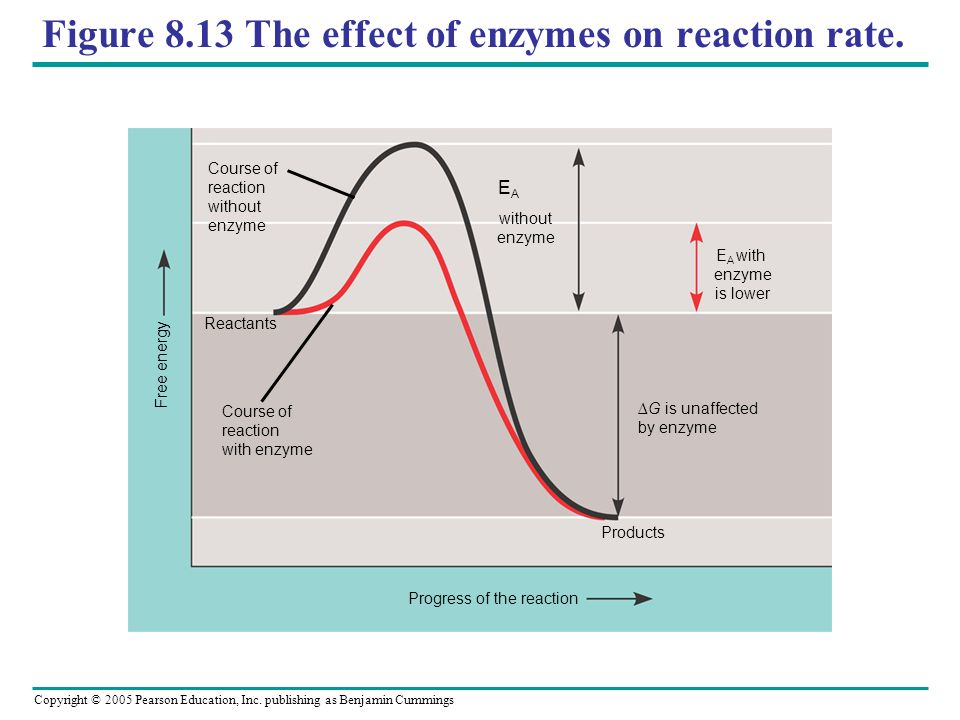 Figure 8.13 The effect of enzymes on reaction rate.