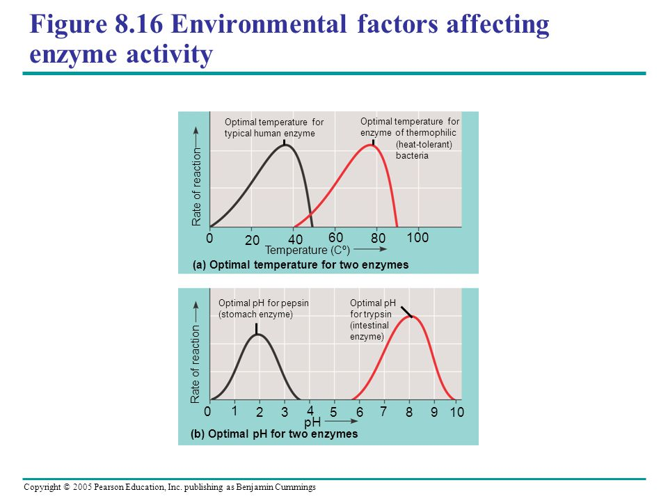 Figure 8.16 Environmental factors affecting enzyme activity