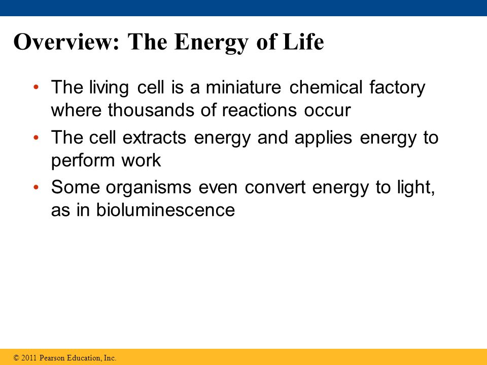 Overview: The Energy of Life