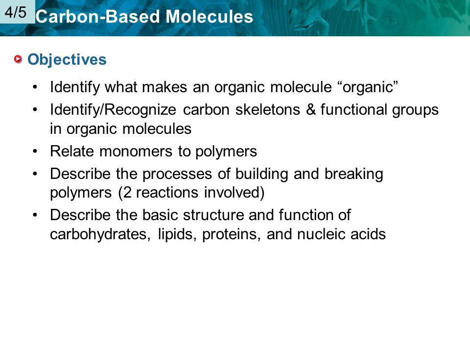 4 5 Key Concept Organic Molecules Are The Foundation Of Life Ppt