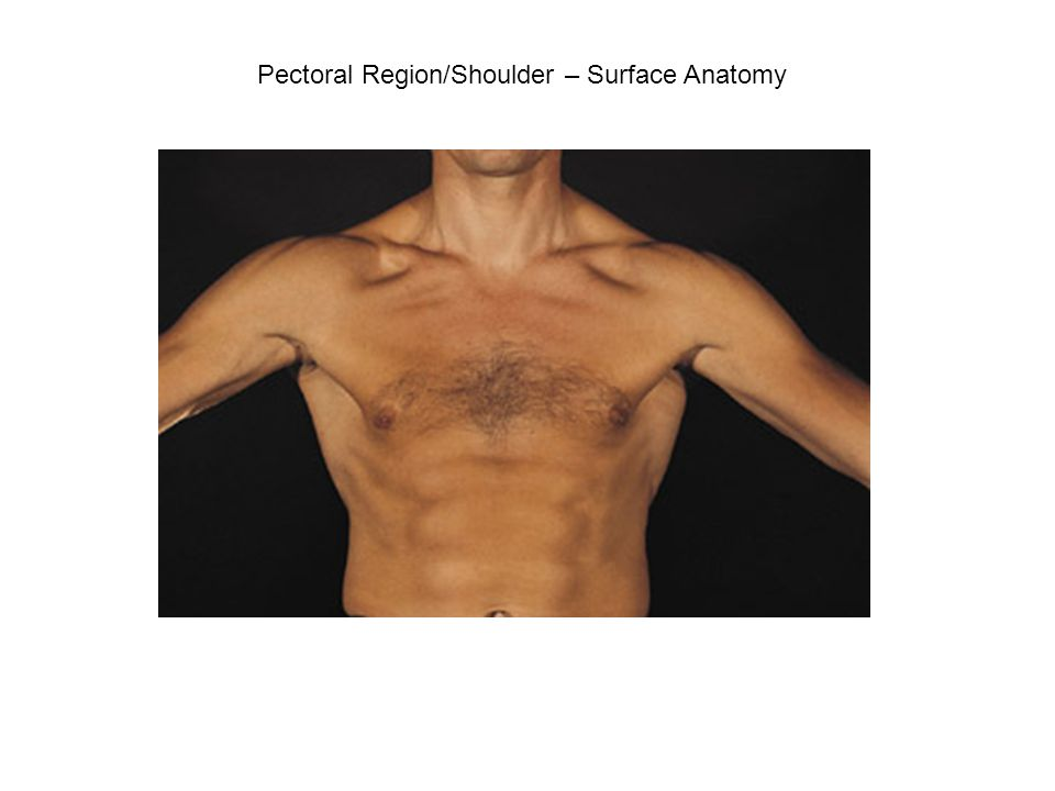 Pectoral Region And Shoulder Ppt Video Online Download