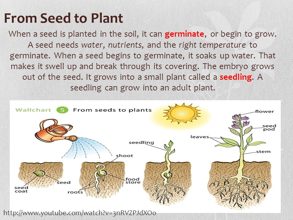 How To Plant Gr From Seed