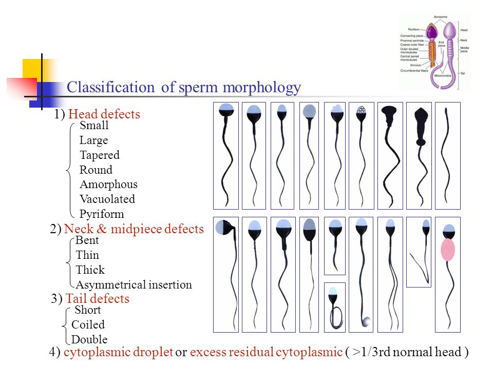 Vagina normal sperm production