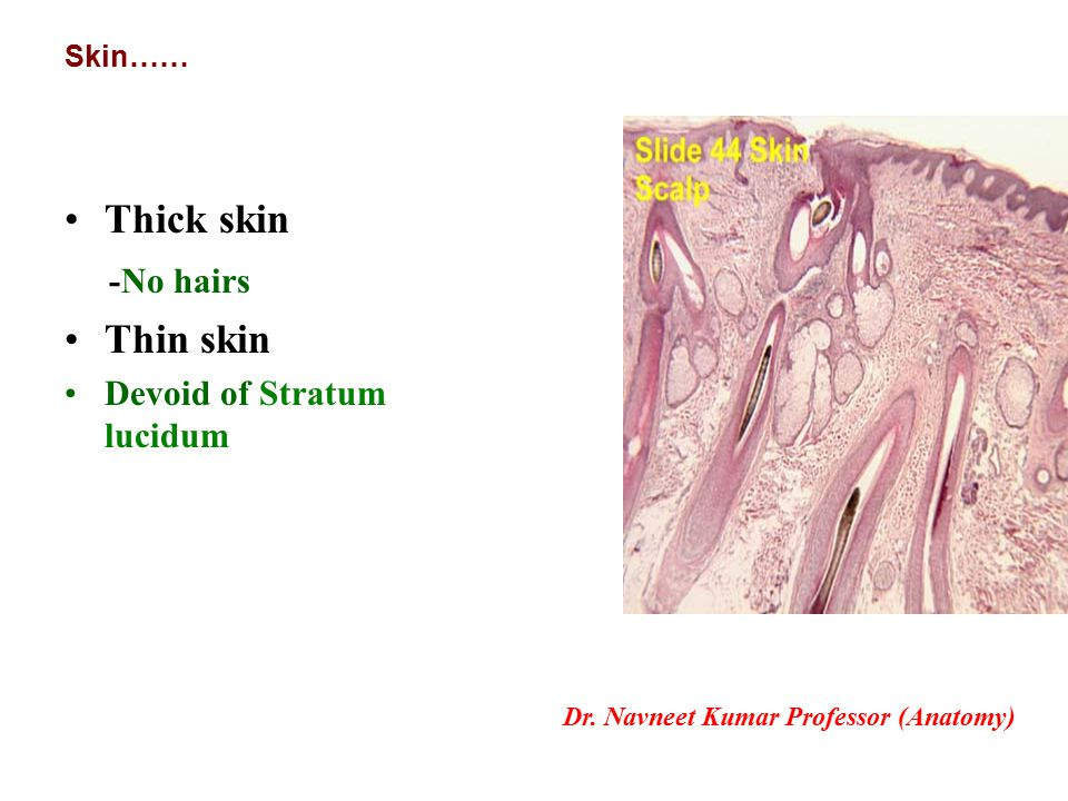 Introduction of Skin and fascia - ppt download