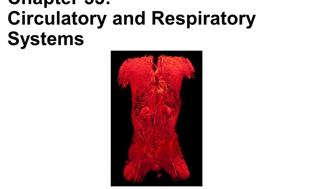 Chapter 33: Circulatory and Respiratory Systems