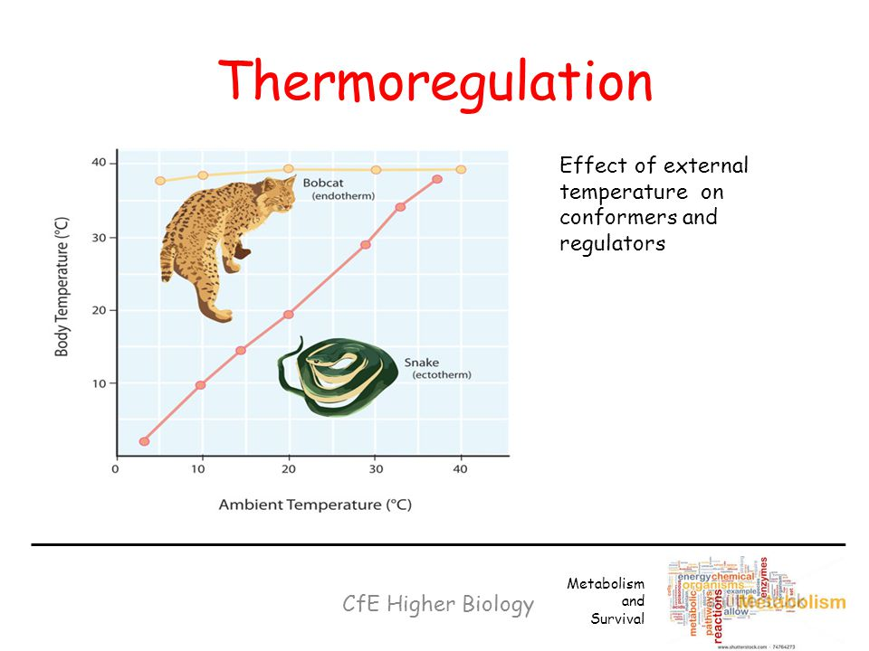 Thermoregulation . Effect of external temperature on conformers and regulators. Metabolism and. Survival.