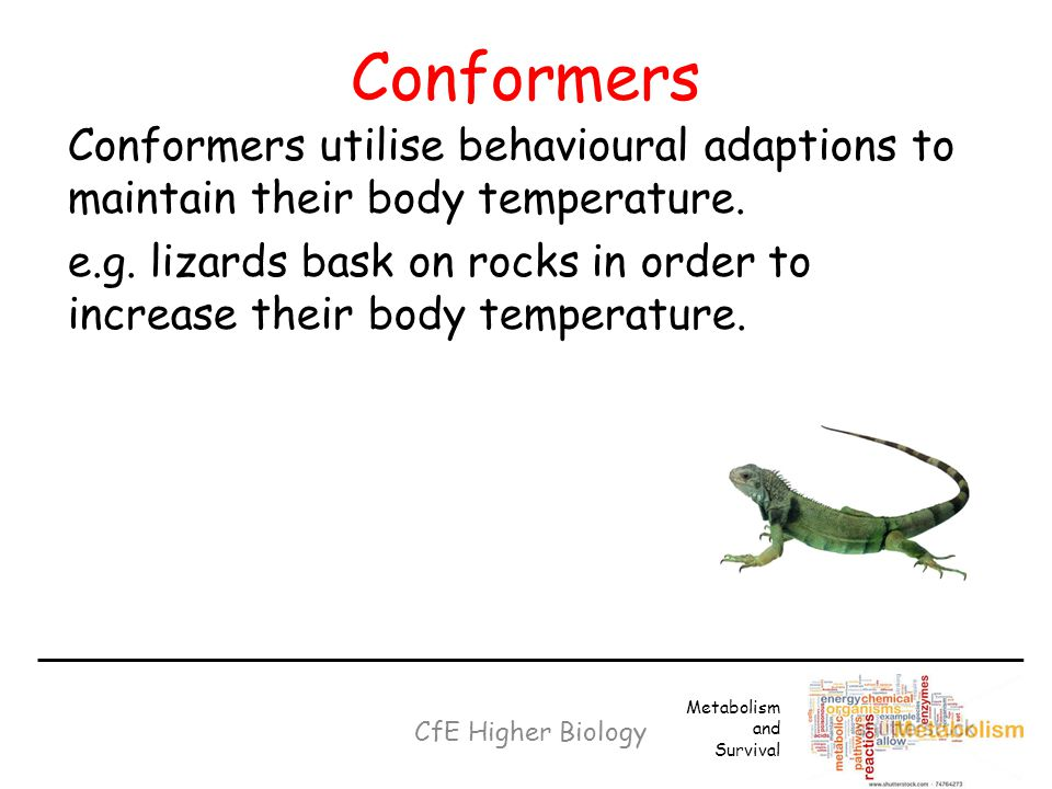 Conformers