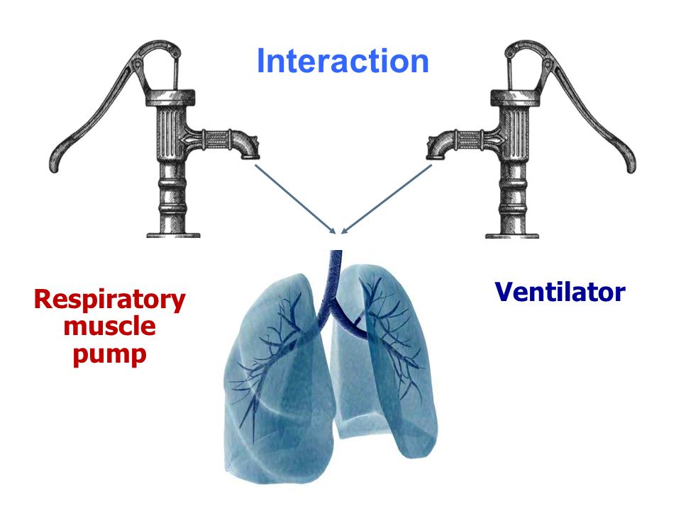 Interaction Ventilator Respiratory muscle pump