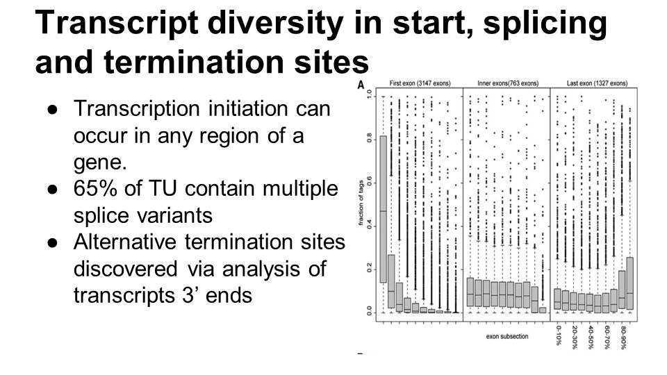 Transcript diversity in start, splicing and termination sites