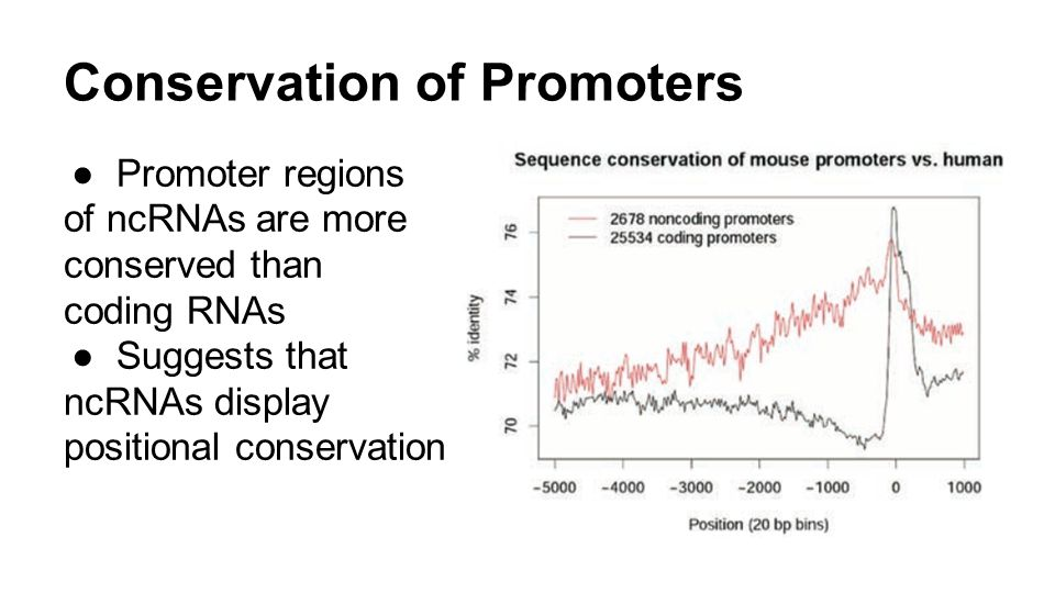 Conservation of Promoters