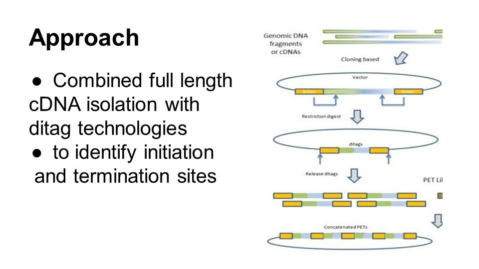 Approach Combined full length cDNA isolation with ditag technologies