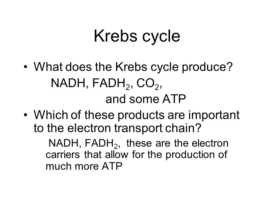 Krebs cycle What does the Krebs cycle produce NADH, FADH2, CO2,