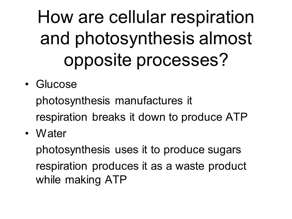 How are cellular respiration and photosynthesis almost opposite processes