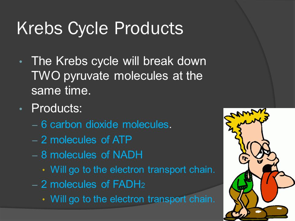 Krebs Cycle Products The Krebs cycle will break down TWO pyruvate molecules at the same time. Products: